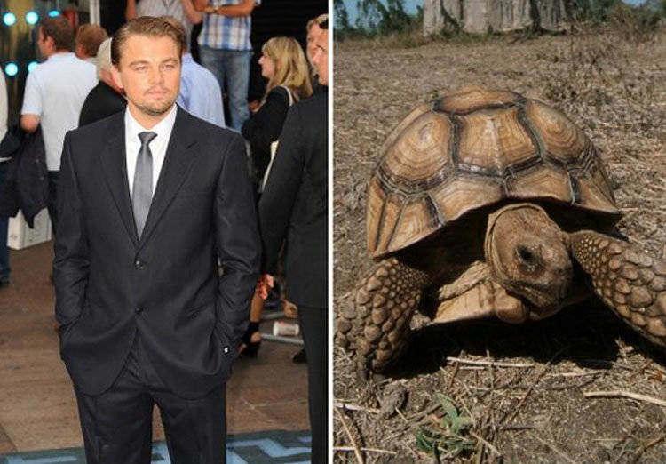 Leonardo DiCaprio Tortoise